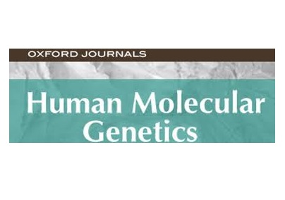 molecular human genetics